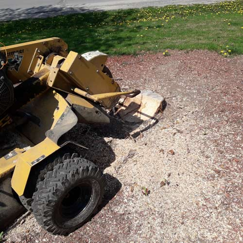 Stump Grinding | Greens Keeper Turf & Tree