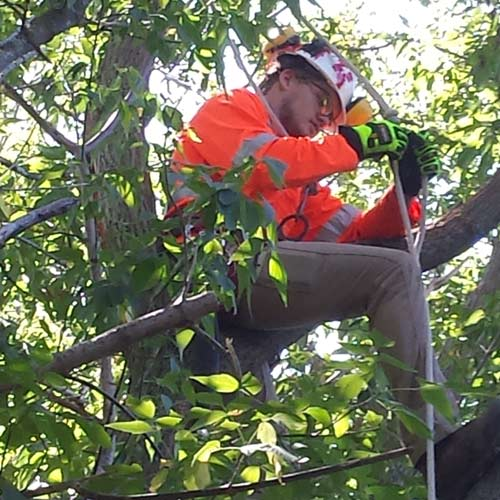 Tree Pruning | Greens Keeper Turf & Tree