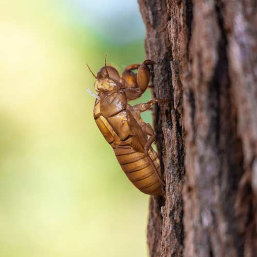 Insect Control | Greens Keeper Turf & Tree