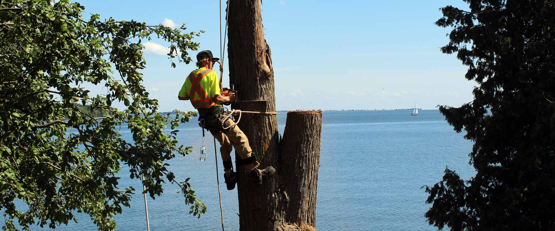 Man providing tree care service | Greens Keeper Turf & Tree