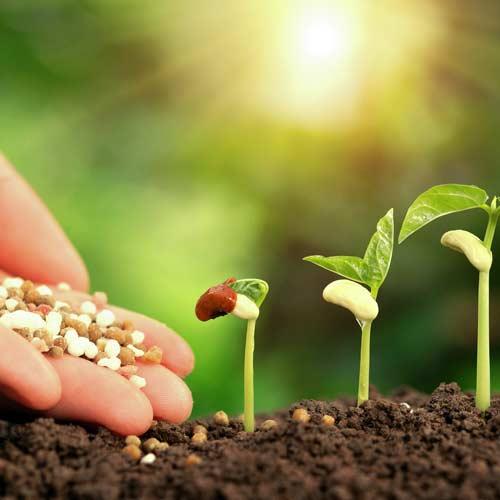 Fertilization service   Greens Keeper Turf & Tree